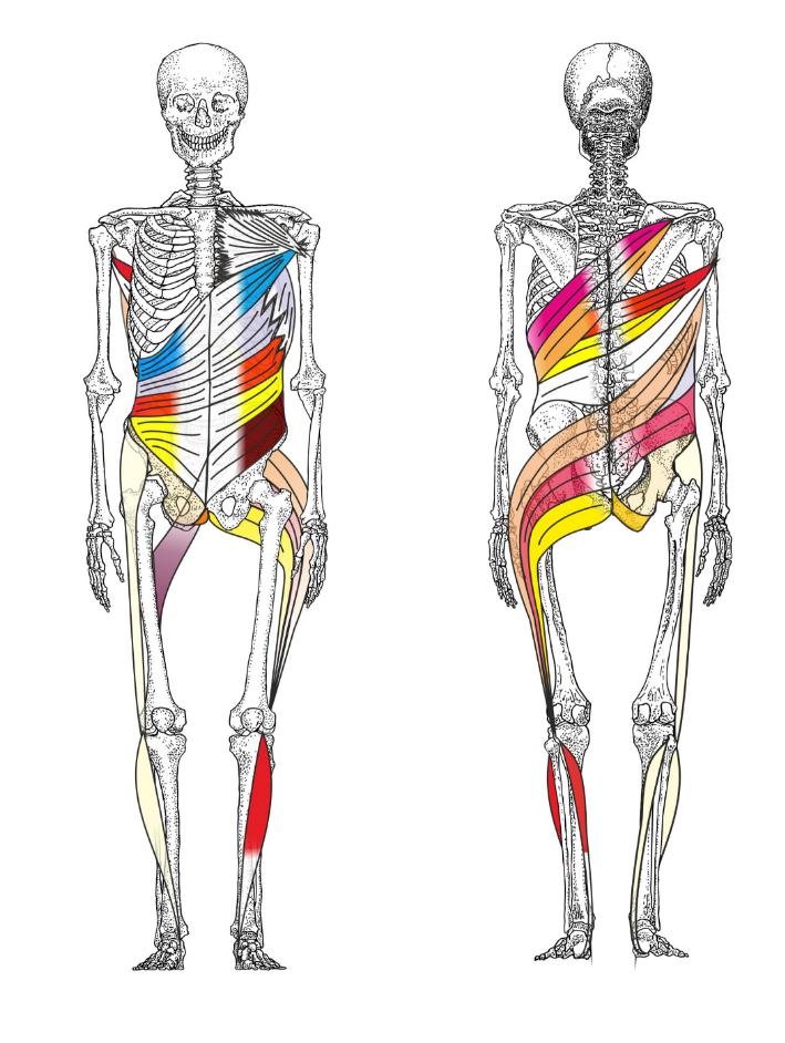 Spiralstabilisaion Muskelketten